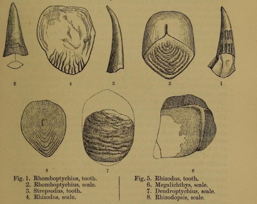 the_quarterly_journal_of_the_geological_society_of_london_-13935692101-.jpg